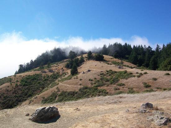 dipsea-trail-next-to (1)